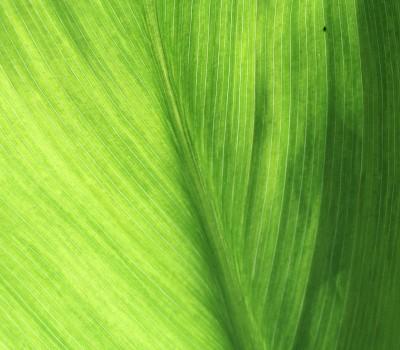 leaf-1359093