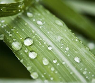 zen-grass-return-1-1245458
